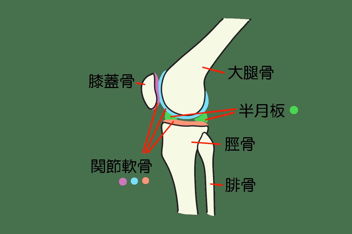 膝ってどうなっているの? 膝の構造について